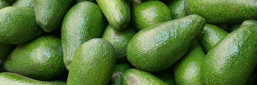 Are Avocados Worth The Price Tag?