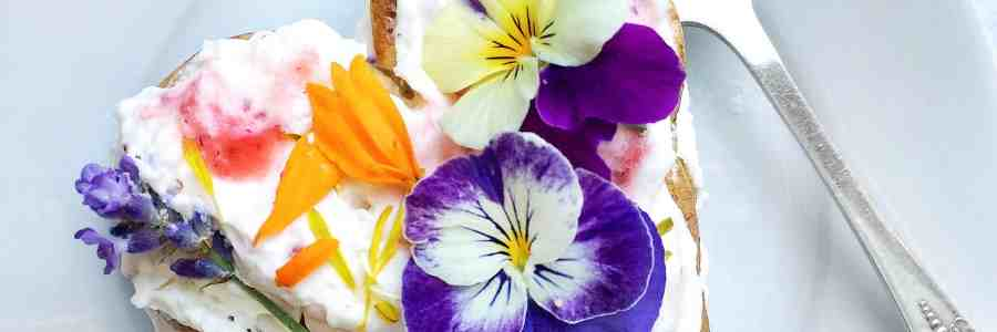 5 Edible Flowers You Can Find In Your Back Yard